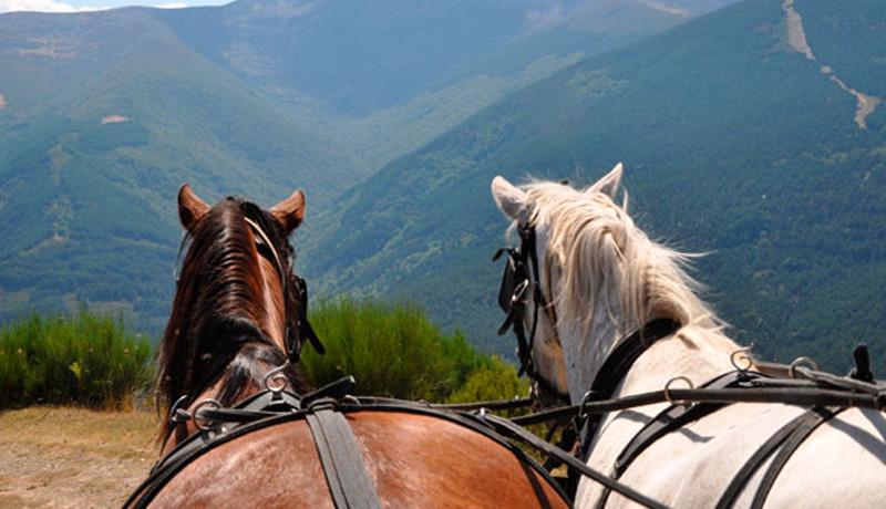 Vistas desde el carro de caballos