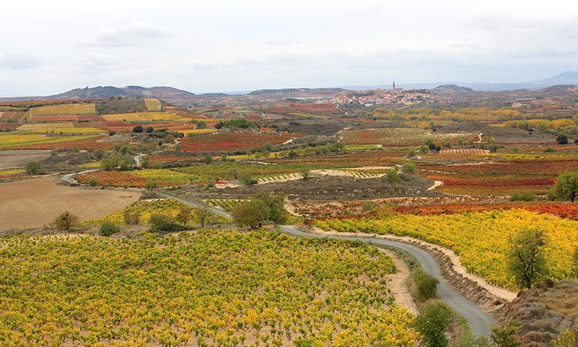 Vista panorámica del paisaje de viñedos
