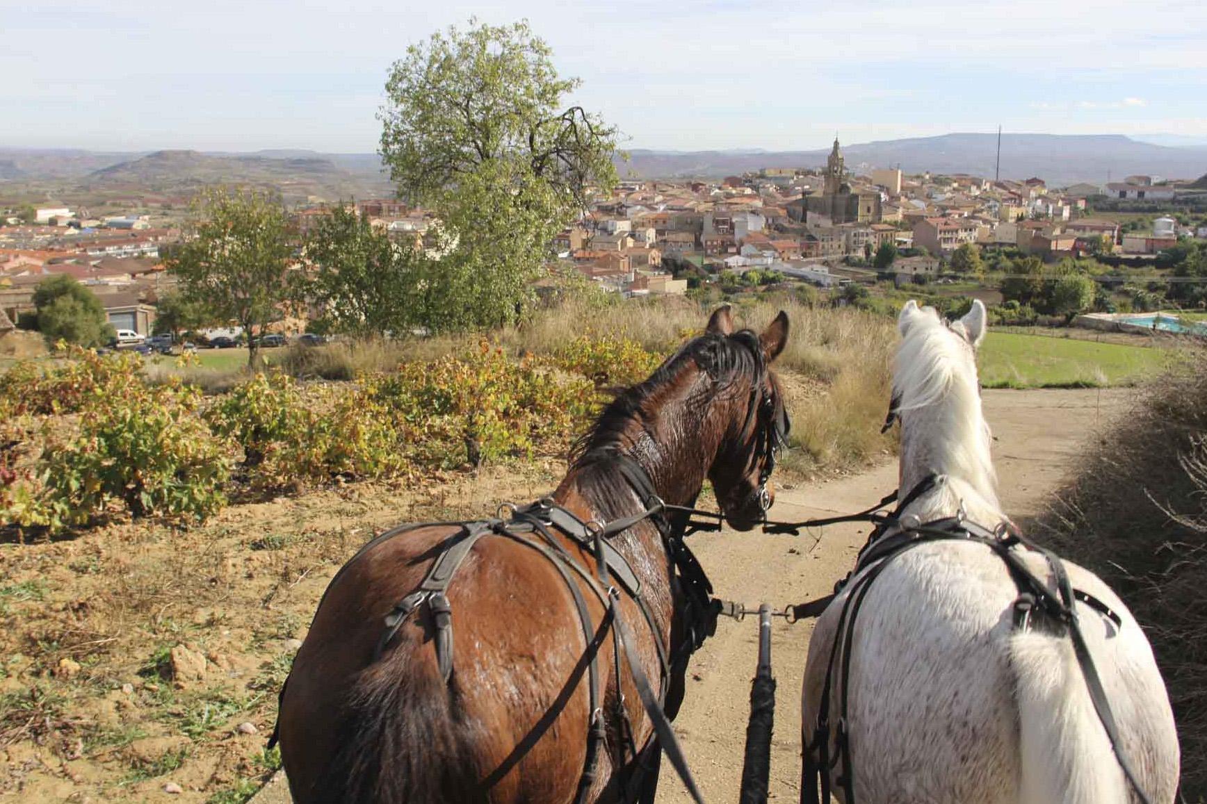 Paseo a caballos entre viñedos