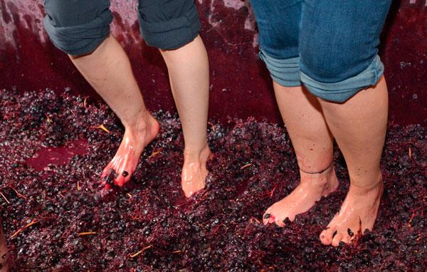 pisado de uva