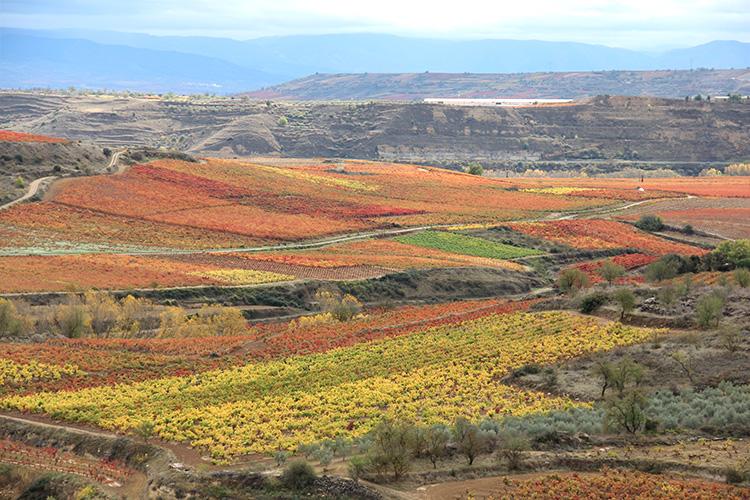 Paisaje de viñedos en otoño
